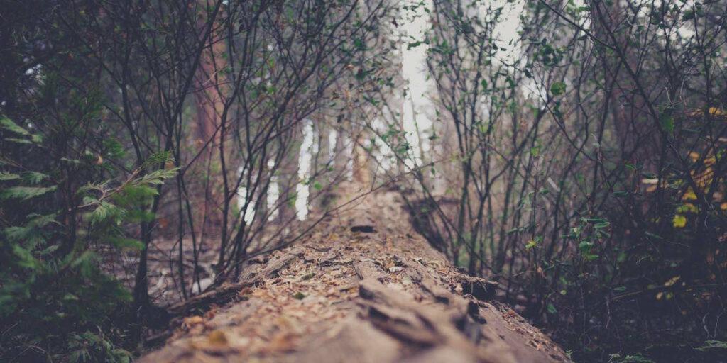 tree_unsplash1.jpg