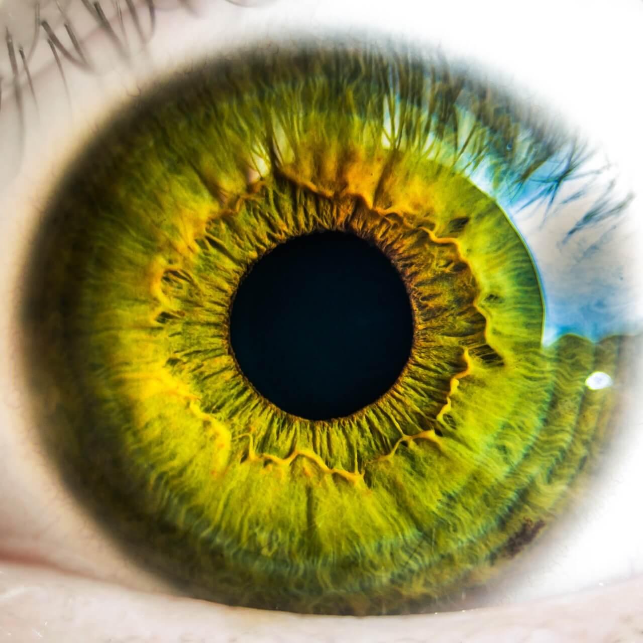 The 411 On Macular Degeneration